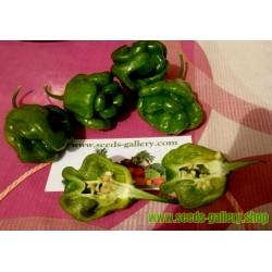 Semillas de Pimiento Habanero Green - Verde