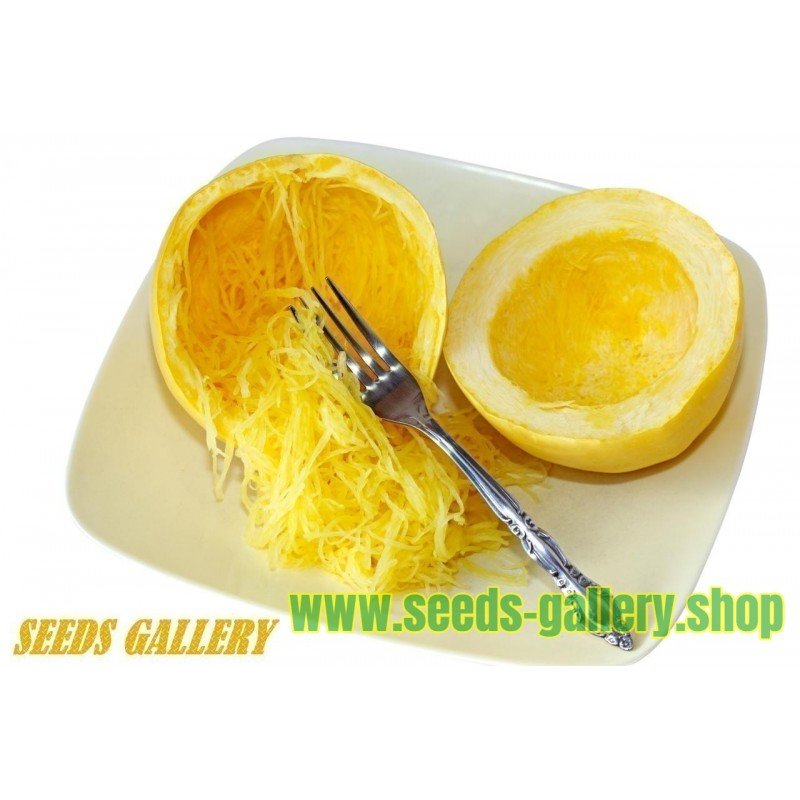 Sementes de Abobora Spaghetti