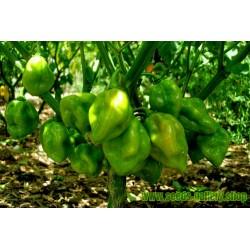Σπόροι Τσίλι πιπέρι Πράσινο Green Habanero