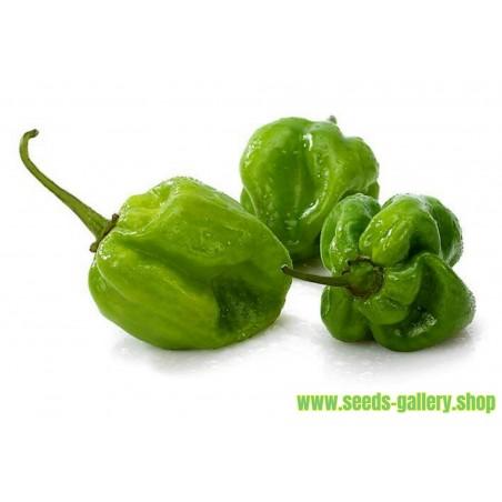 Green Habanero Seeds