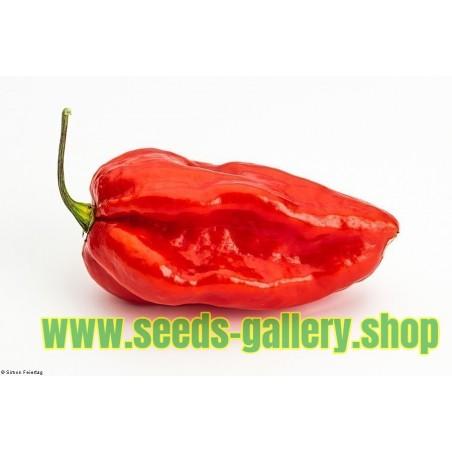 Devil's Tongue Red Habanero Seme