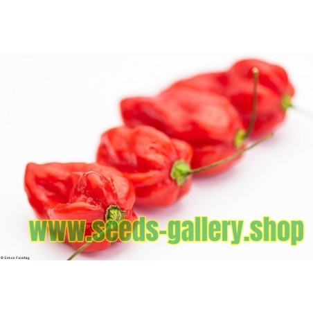 Σπόροι Τσίλι Πιπέρι Devil's Tongue Red