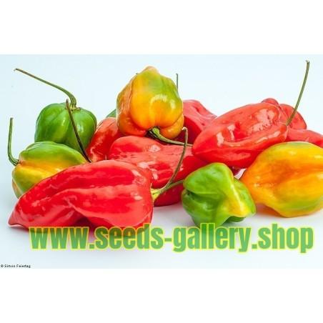 Hot pepper seed ''Dzinka'' Serbian variety