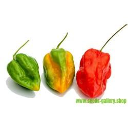 Chilifrön Devils Tongue Red