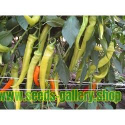 Hot Pepper Seeds NISKA SIPKA Serbian Variety