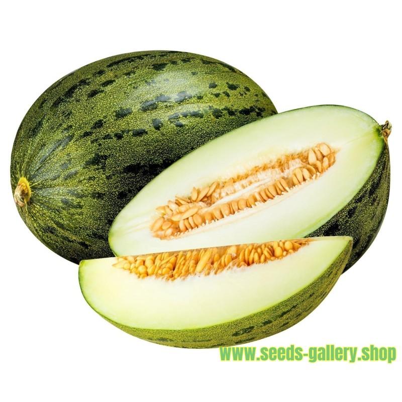Piel de Sapo Seeds (Cucumis melo)