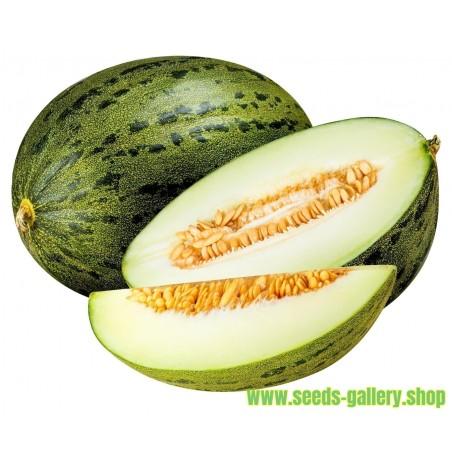 Semillas De Melon Piel De Sapo (Cucumis melo)