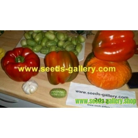 Red Monster Giant Sweet Pepper Seeds