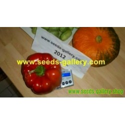Spaghetti Winter Squash Seeds