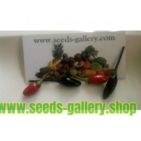 Orozco Chilipeppar ekologiskt frö