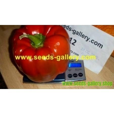 Σπόροι πιπέρι Red Monster Giant