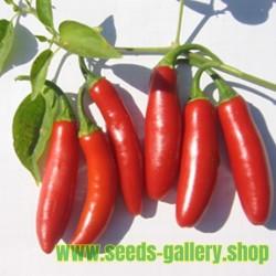 Sementes de Serrano Chile (Capsicum annuum)