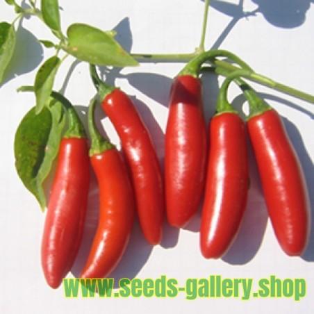 Serrano Chilli Seeds (Capsicum annuum)