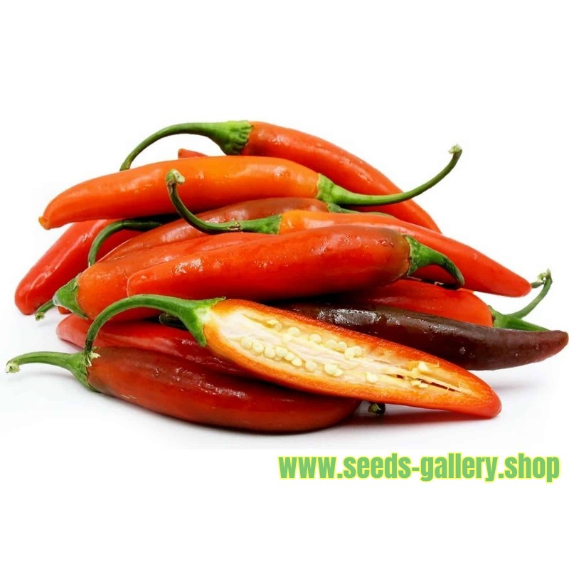 Graines de Serrano Chilli Piment (Capsicum annuum)