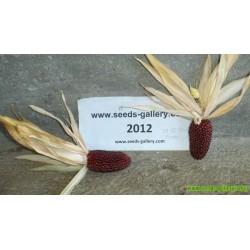 Frön Pop Corn ''Jordgubb''