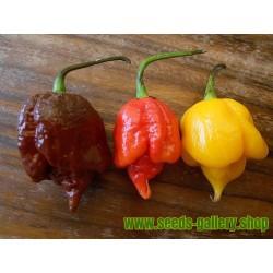 Semillas De Chile Trinidad Scorpion Rojo y Amarillo