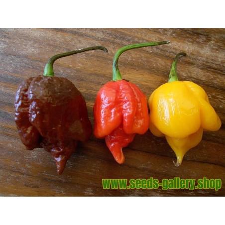Trinidad Scorpion Röd och Gul Chili frö 1,5 mill. SHU