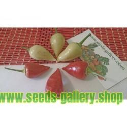 White Chili Seeds SPEAR
