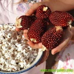Pop Corn Strawberry Seeds