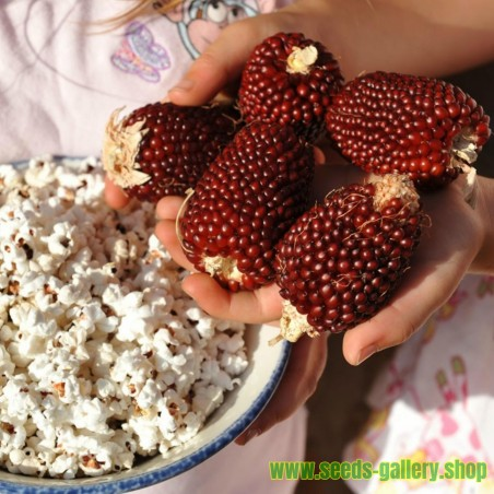 Pop Corn Strawberry Seeds