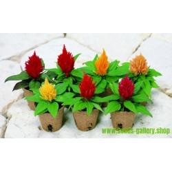 Celosia argentea Seeds Mix
