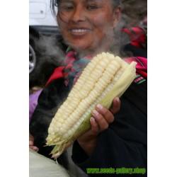 Semillas Maiz Blanco Gigante del Cuzco