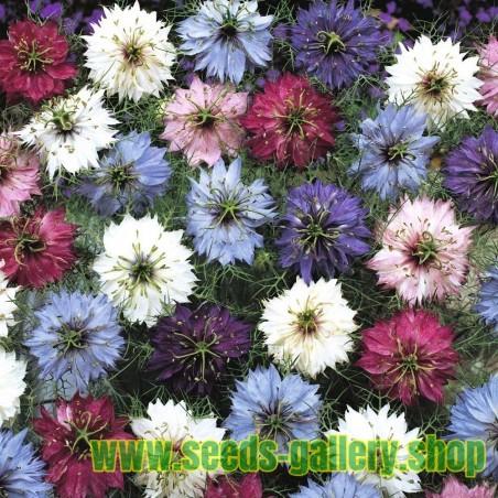 Sementes de Dedo-de-dama multicolorido