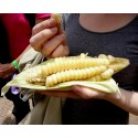 Worlds Largest Giant Corn Seeds Cuzco