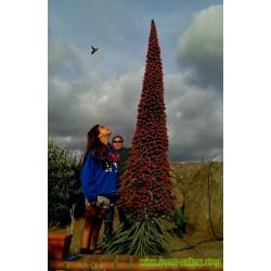 Aloe vera Seeds (Aloe barbadensis)