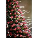 Cactus Mix seeds 'Mixed Desert Species'
