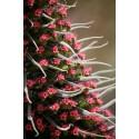 Graines De Cactus Mix 15 espèces différentes