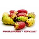 Indian fig Cactus seeds (Opuntia Ficus-Indica)