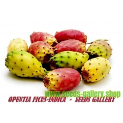 Fikonkaktus Frön (Opuntia Ficus-Indica)