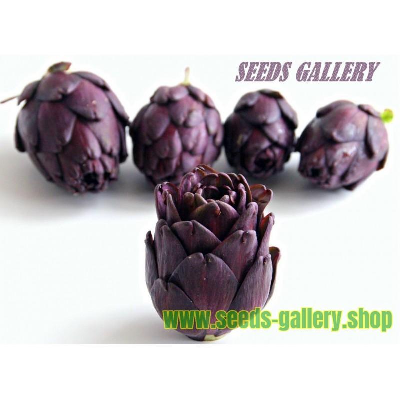Σπόροι Αγκινάρες Violet de Provence