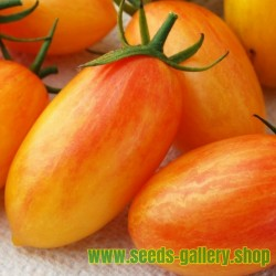 ARTISAN BLUSH TIGER Cherry Tomato Seeds