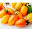 Semillas de tomate COSTOLUTO GENOVESE