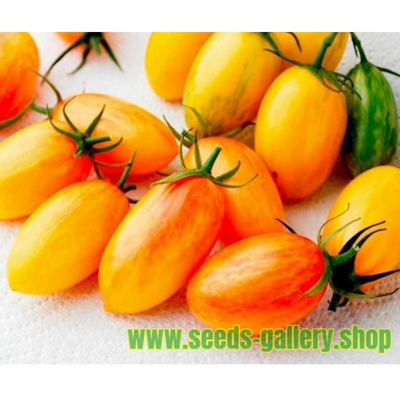 ARTISAN BLUSH TIGER Cherry Tomato Seeds