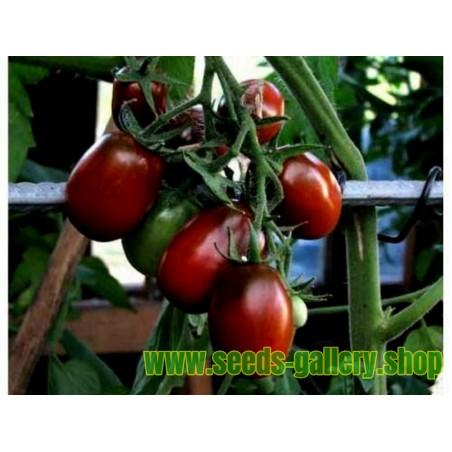 Sementes de tomate BLACK PLUM