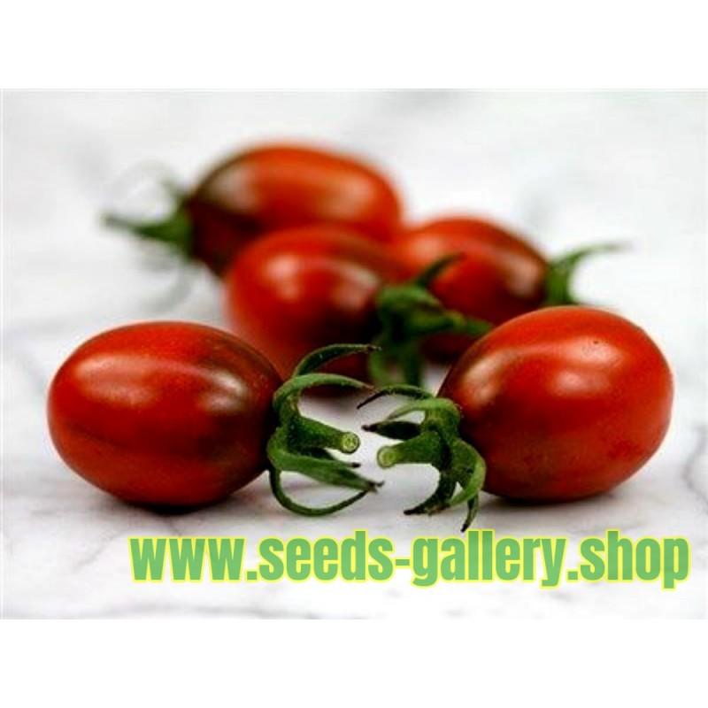 Tomaten Samen BLACK PLUM