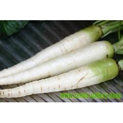 Sementes de Cenoura Branca LUNAR WHITE