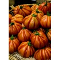 Semillas de tomate CHARLIE CHAPLIN