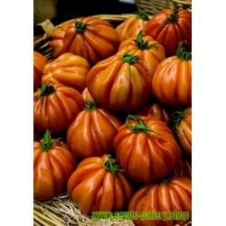 Ντομάτα σπόρος CHARLIE CHAPLIN