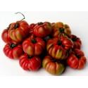 MARCONI PURPLE Seme Slatke Paprike