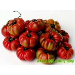 Sementes de tomate COSTOLUTO GENOVESE