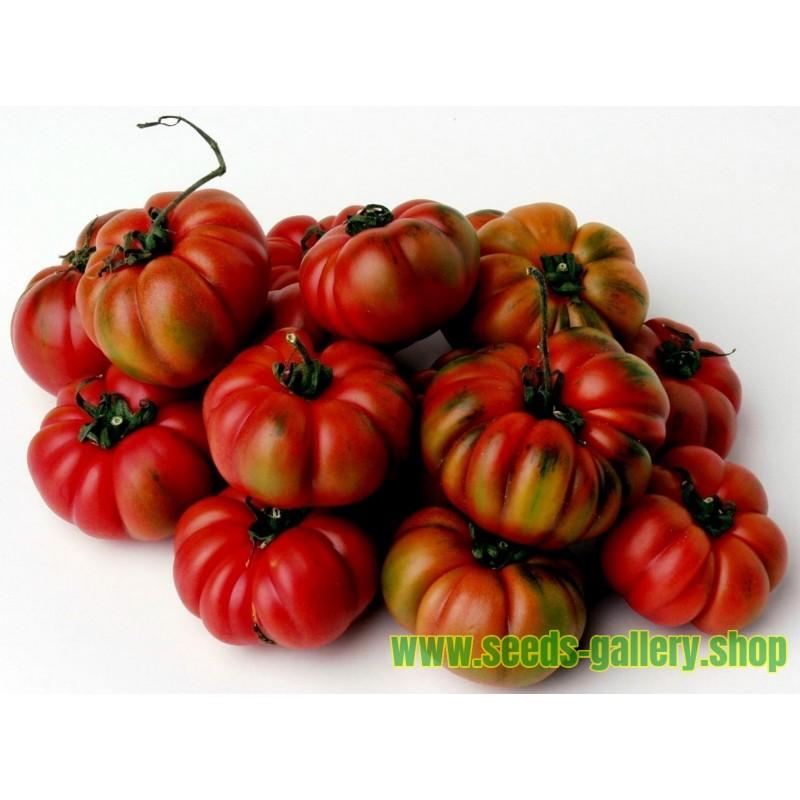 Tomat frön COSTOLUTO GENOVESE