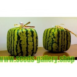 Cube Watermelon Seeds