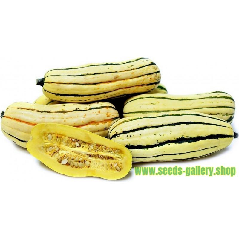 Semi di Zucchino DELICATA