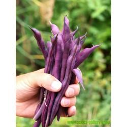 Seme Crnog kukuruza Black Aztek