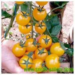 Semillas de Tomate Cereza amarillo GOLDKRONE