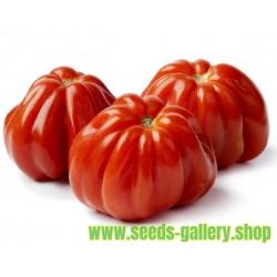 Italienische CUORE DI BUE Tomaten Samen